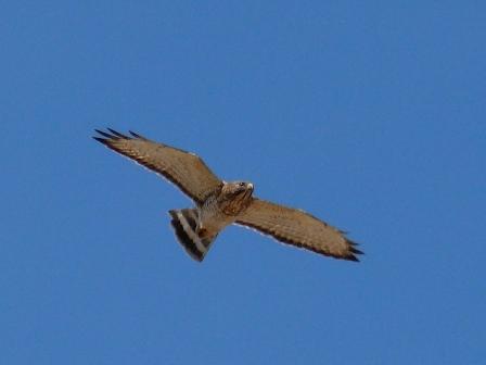 WPBO Hawk
